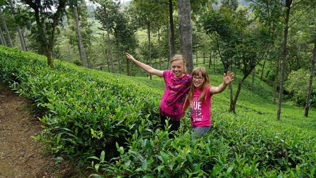 Vakantie met Kinderen op reis in Sri Lanka theeplantage