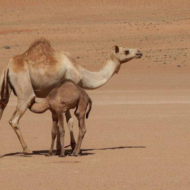 Maak kennis met sprookjesachtig Oman