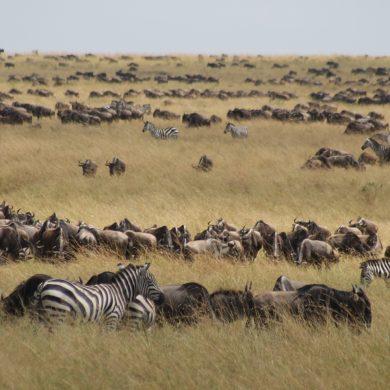 De mooiste nationale parken in Kenia